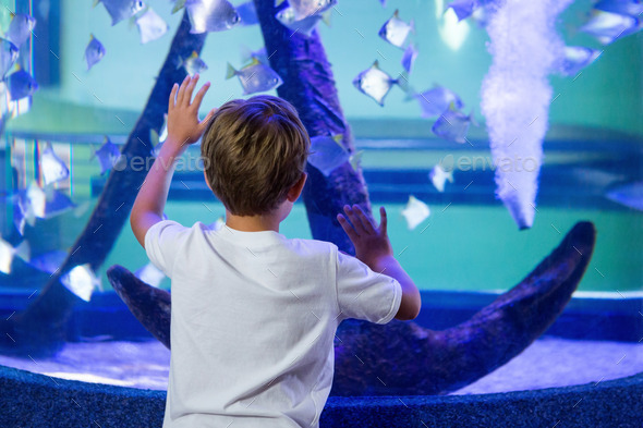 Young man touching a fish-tank behind the camera at the aquarium - Stock Photo - Images
