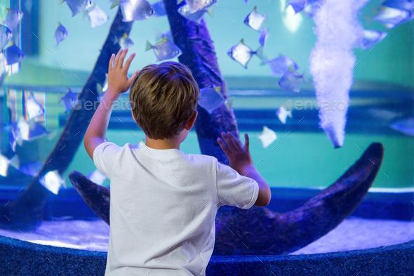 Young man touching a fish-tank behind the camera at the aquarium - Stock Photo - Images