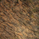 Top Aerial View of Barren Forest