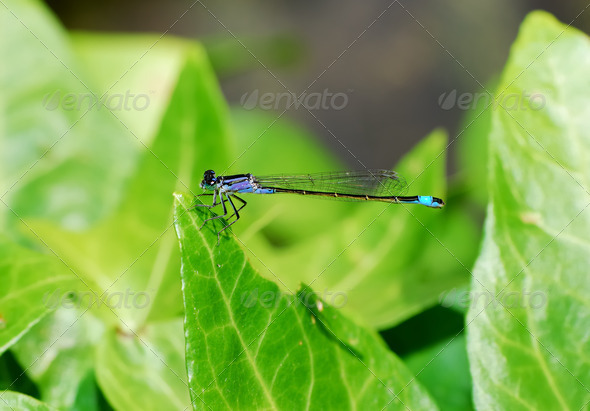 Damselfly - Stock Photo - Images