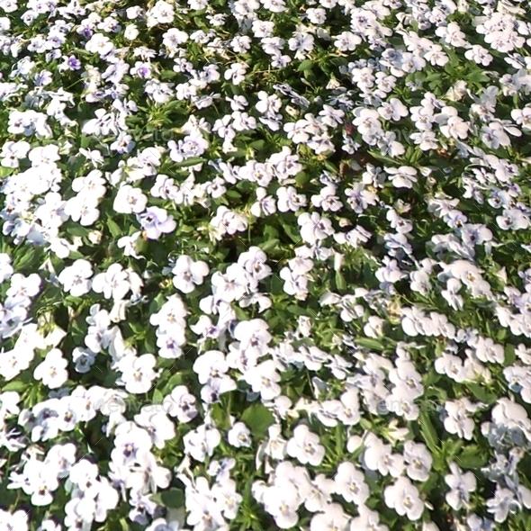 White flowerbed seamless texture by luckyfingers 3docean white flowerbed seamless texture 3docean item for sale imagessceneg imagesscene0003g imagesscene0004g mightylinksfo