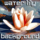 Water Lily Blooming - VideoHive Item for Sale