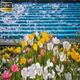 Tulips And The Water - VideoHive Item for Sale