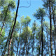 Wind in The Forest - VideoHive Item for Sale