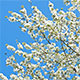 Spring Time Blooming Tree - VideoHive Item for Sale