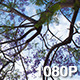 Blossoming Jacaranda Branch with Clouds - VideoHive Item for Sale