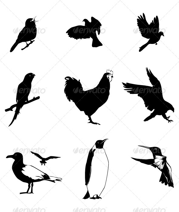 Birds Set - Characters Vectors