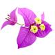 Santa Rita Flowers - GraphicRiver Item for Sale
