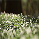 Anemone Part 1 - VideoHive Item for Sale