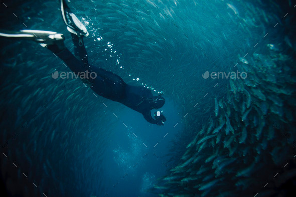 free diving into a sardine ball - Stock Photo - Images