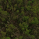 Forest Tree Tops Aerial View - VideoHive Item for Sale