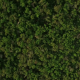 Satellite Aerial View of Forest  - VideoHive Item for Sale