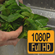 Mint Washing - VideoHive Item for Sale