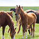 Wild Horses 3 - VideoHive Item for Sale