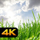 Grass and Moving Clouds - VideoHive Item for Sale