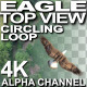 Eagle Circling Top View  - VideoHive Item for Sale