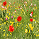 Spring Flowers in the Meadow - VideoHive Item for Sale
