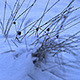 Grass on Winter Field - VideoHive Item for Sale