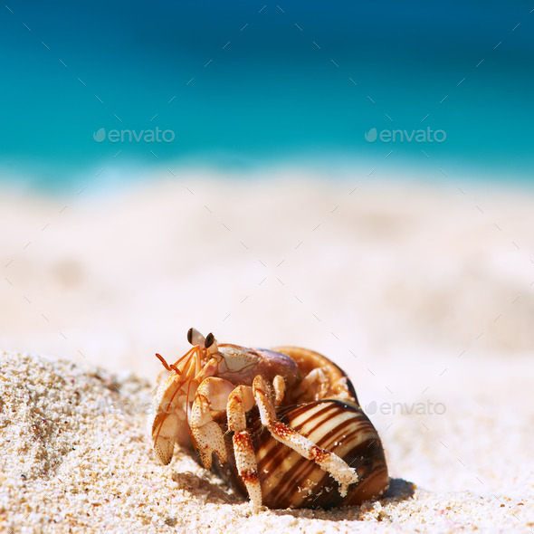Hermit crab at beach - Stock Photo - Images