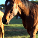 Horses Walking Towards Camera - VideoHive Item for Sale
