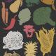 Vector Set: Hand Drawn Fruits & Vegetables - GraphicRiver Item for Sale