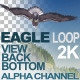 Bald Eagle Bottom View - VideoHive Item for Sale