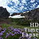 Purple Flowers Mountains Clouds Penstemon Petals - VideoHive Item for Sale