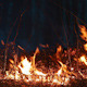 Burning grass - VideoHive Item for Sale