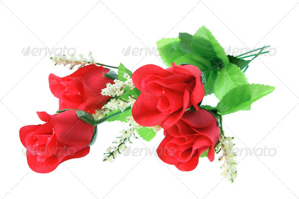 Red Roses on White Background - Stock Photo - Images