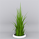 Grass - 3DOcean Item for Sale
