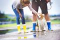Dog walk in rain