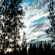 Sunset Trees - VideoHive Item for Sale