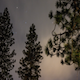 Night Sky and Tree - VideoHive Item for Sale