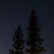 The Stars and Trees - VideoHive Item for Sale