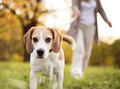 Dog walk - PhotoDune Item for Sale