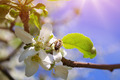 Spring nature - PhotoDune Item for Sale