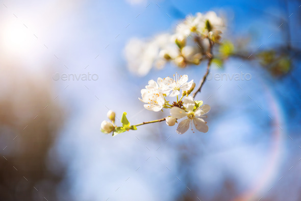 Spring nature - Stock Photo - Images