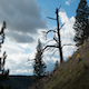 Wide Dead Tree Canyon - VideoHive Item for Sale