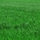 Green Grass On Field - VideoHive Item for Sale