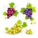 Bunches Of Grapes - GraphicRiver Item for Sale