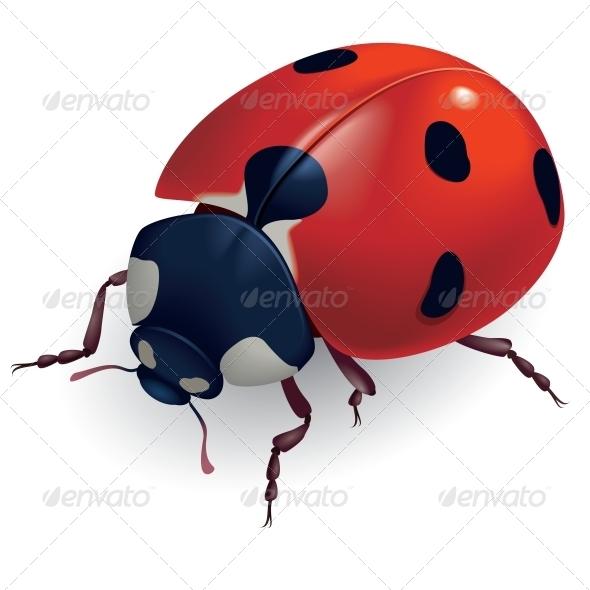 Ladybug. (Lat. Coccinellidae) - Animals Characters