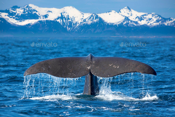 Whale tail - Stock Photo - Images