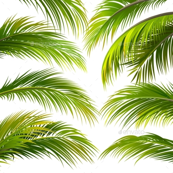 Palm Leaves. Vector - Flowers & Plants Nature