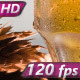 Lager Beer in a Mug - VideoHive Item for Sale