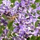 Bees (Nature) - VideoHive Item for Sale