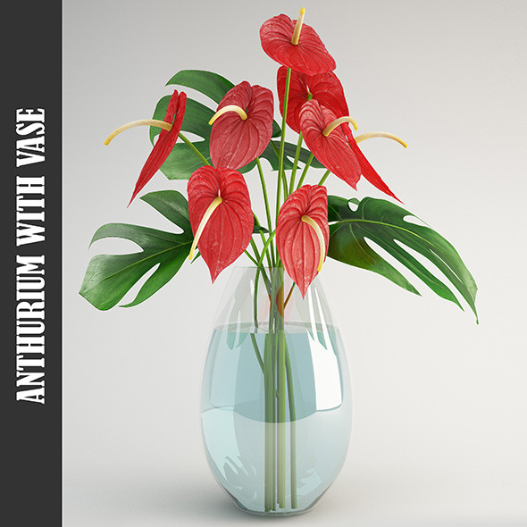 Anthurium - 3DOcean Item for Sale