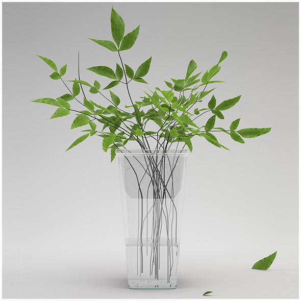 Ptelea trifoliata - 3DOcean Item for Sale