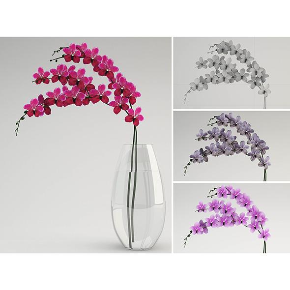 Vanda - 3DOcean Item for Sale