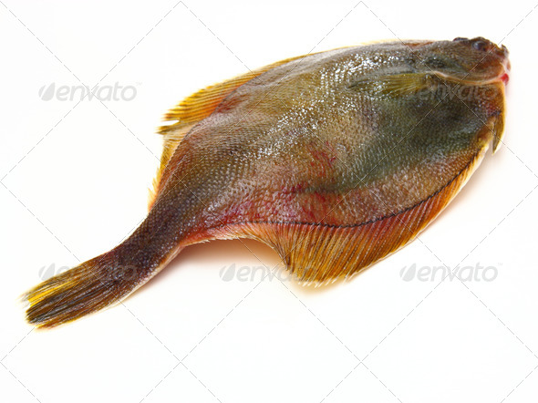 Fresh fishes flounder  on white background - Stock Photo - Images