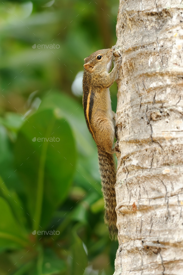 Wild chipmunk - Stock Photo - Images